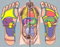 inwendig lichaam afbeelding